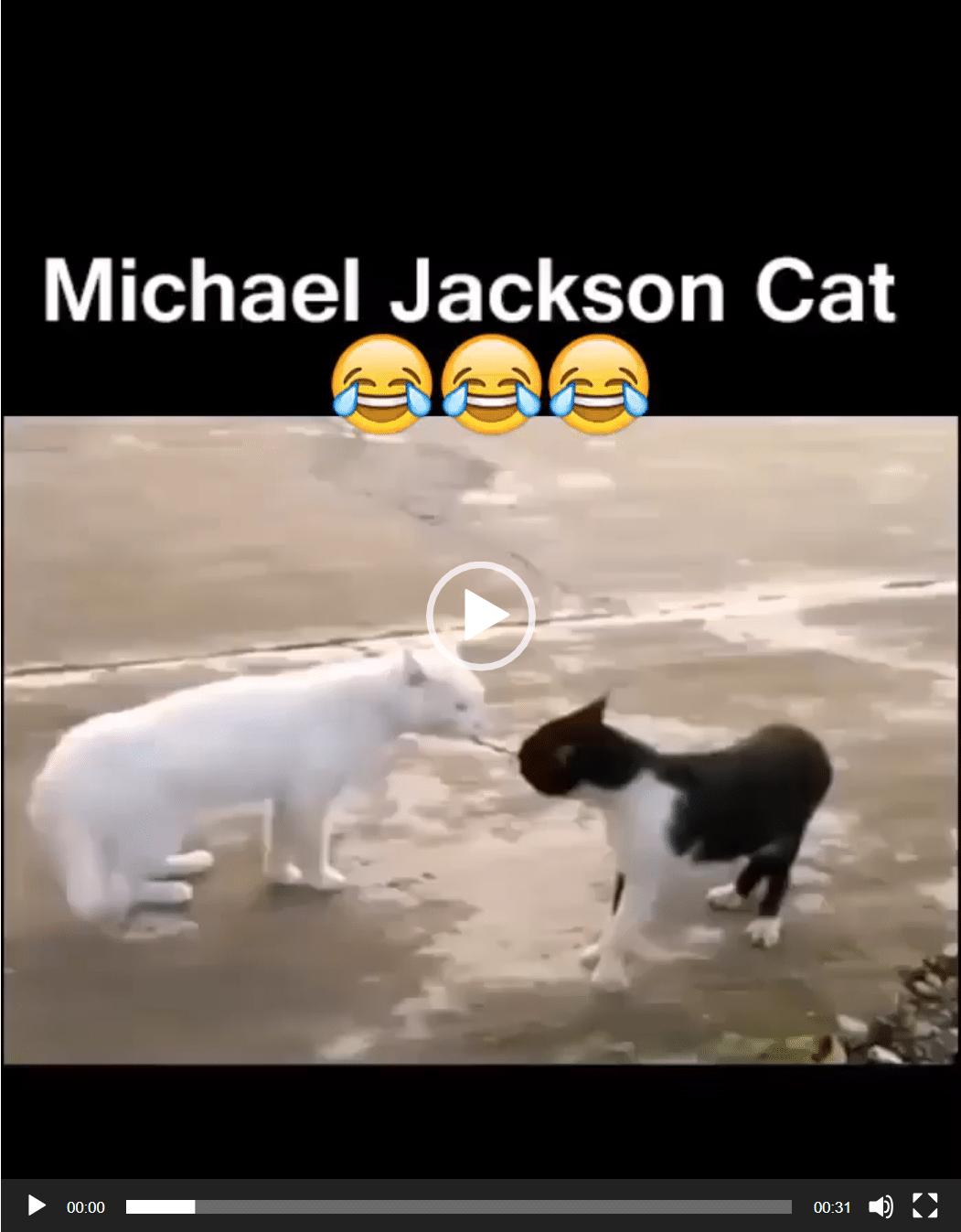 Michael Jackson Cat