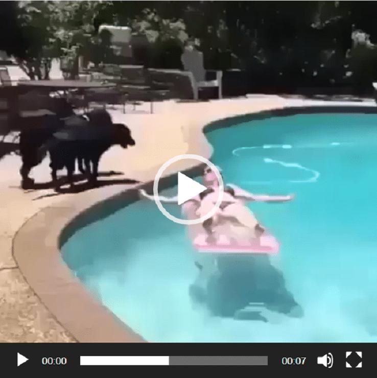 Tu es posé dans ta piscine quand tout à coup ...
