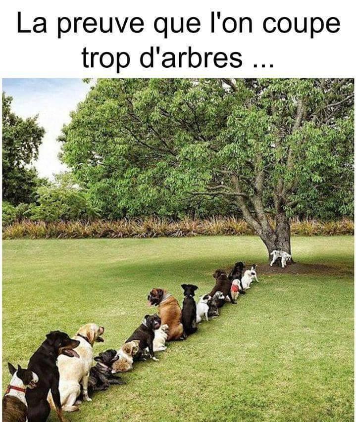La preuve que l'on coupe trop d'arbres...