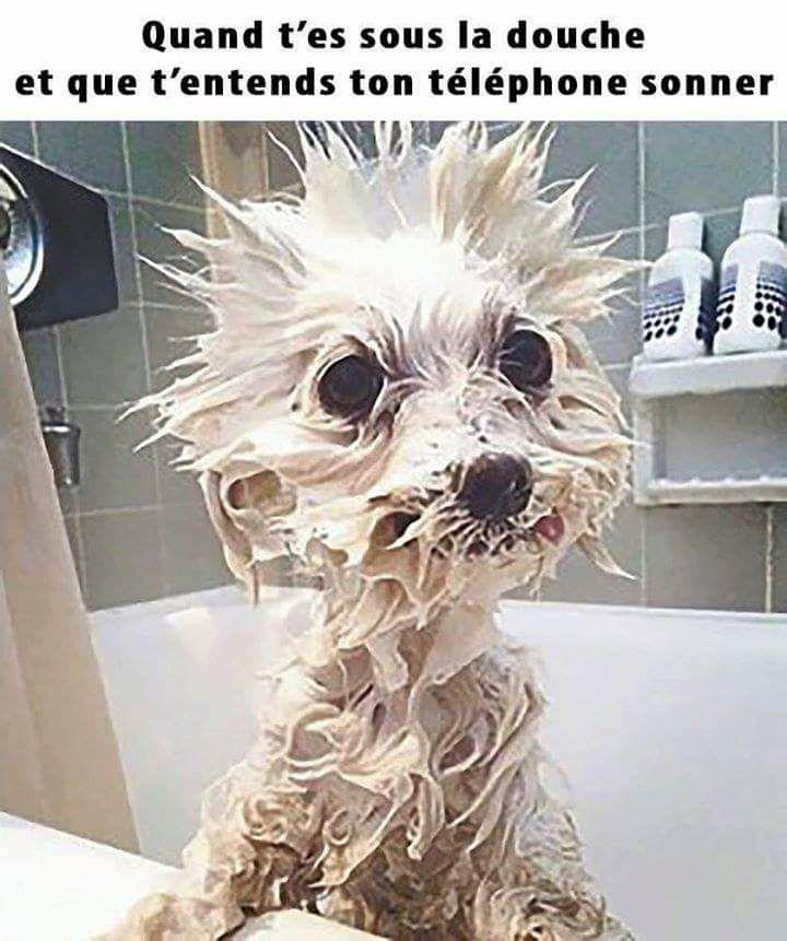 Quand t'es sous la douche et que t'entends ton téléphone sonner