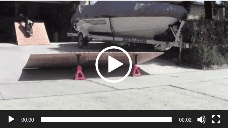 Incroyable un chien qui saute un tremplin avec son skate