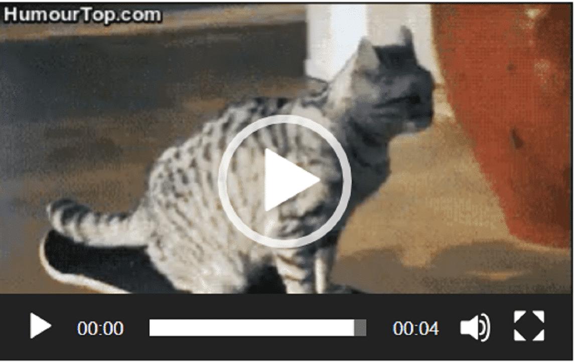 Un chat qui fait du skate comme un pro