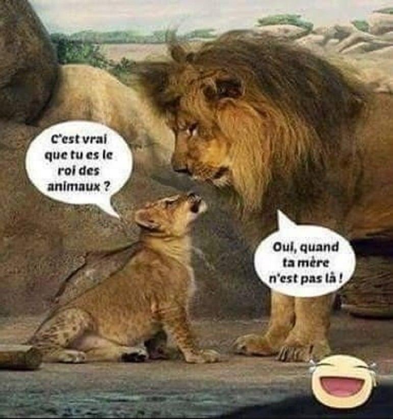 C'est vrai que tu es le roi des animaux