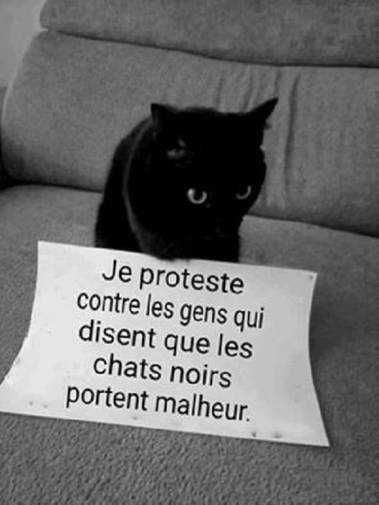 Je proteste contre les gens qui disent que les chats noirs portent malheur.