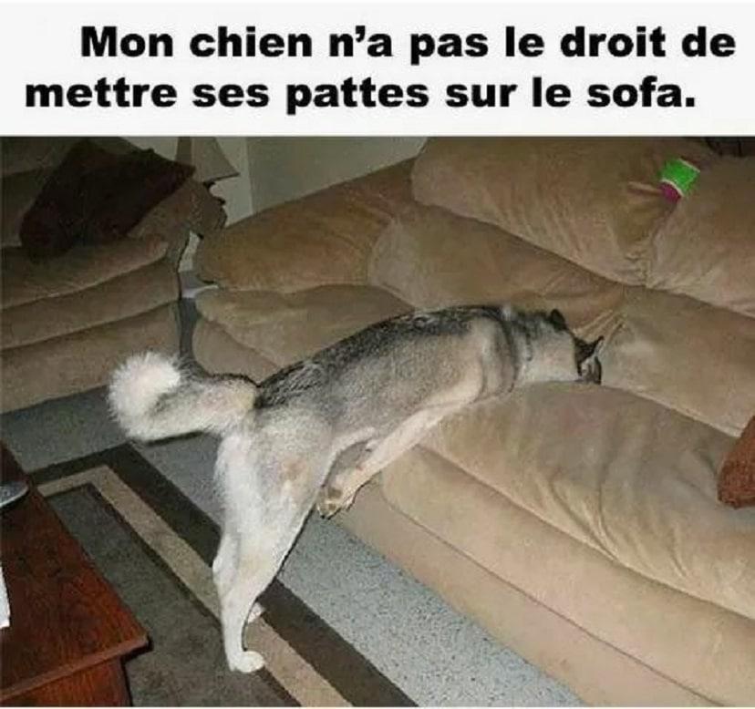 Mon chien na pas le droit de mettre ses pattes sur le sofa