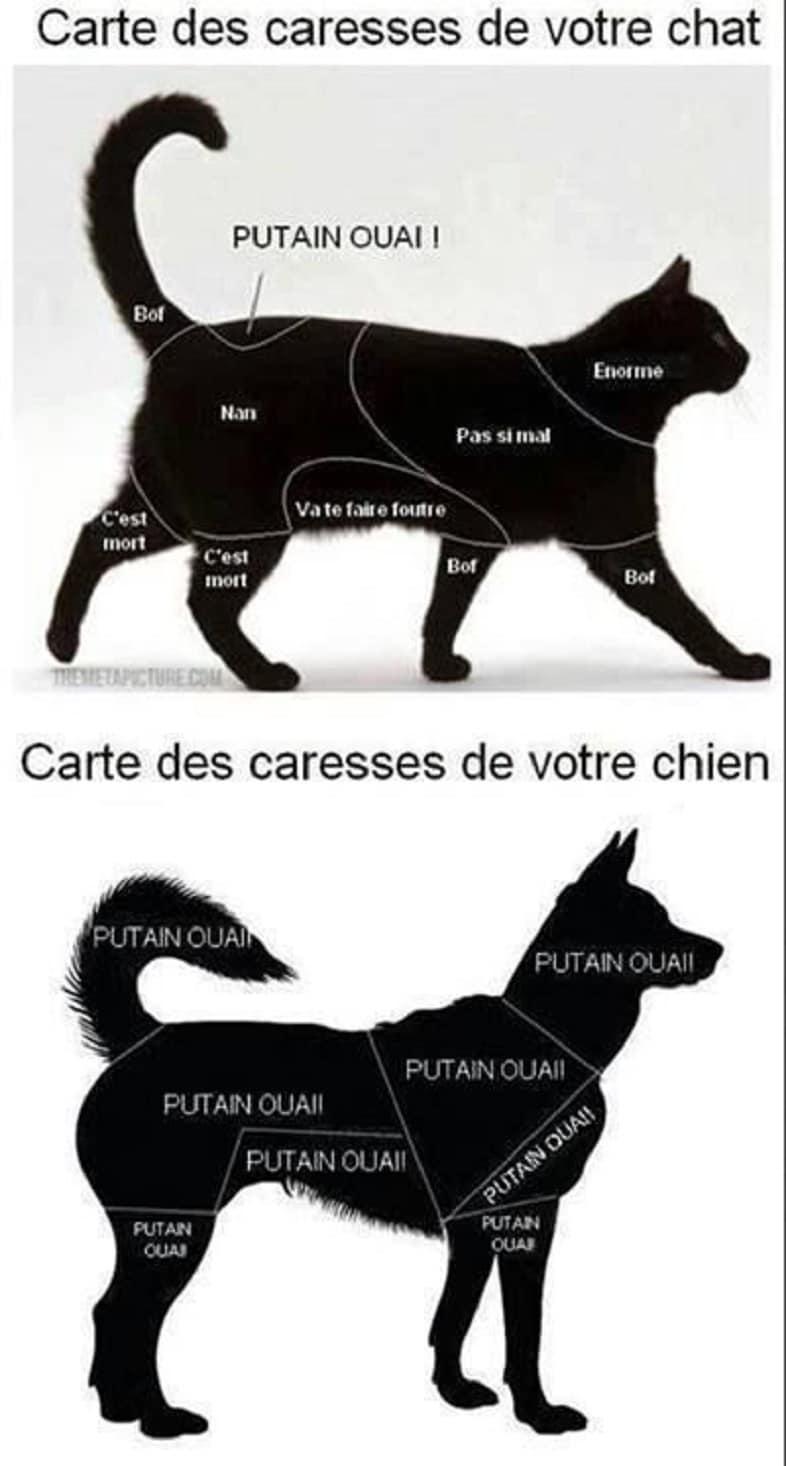 Carte des caresses de votre chat et chien