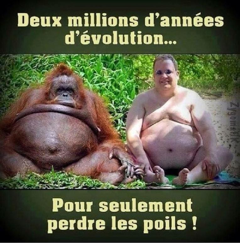 Deux millions d'années d'évolution...