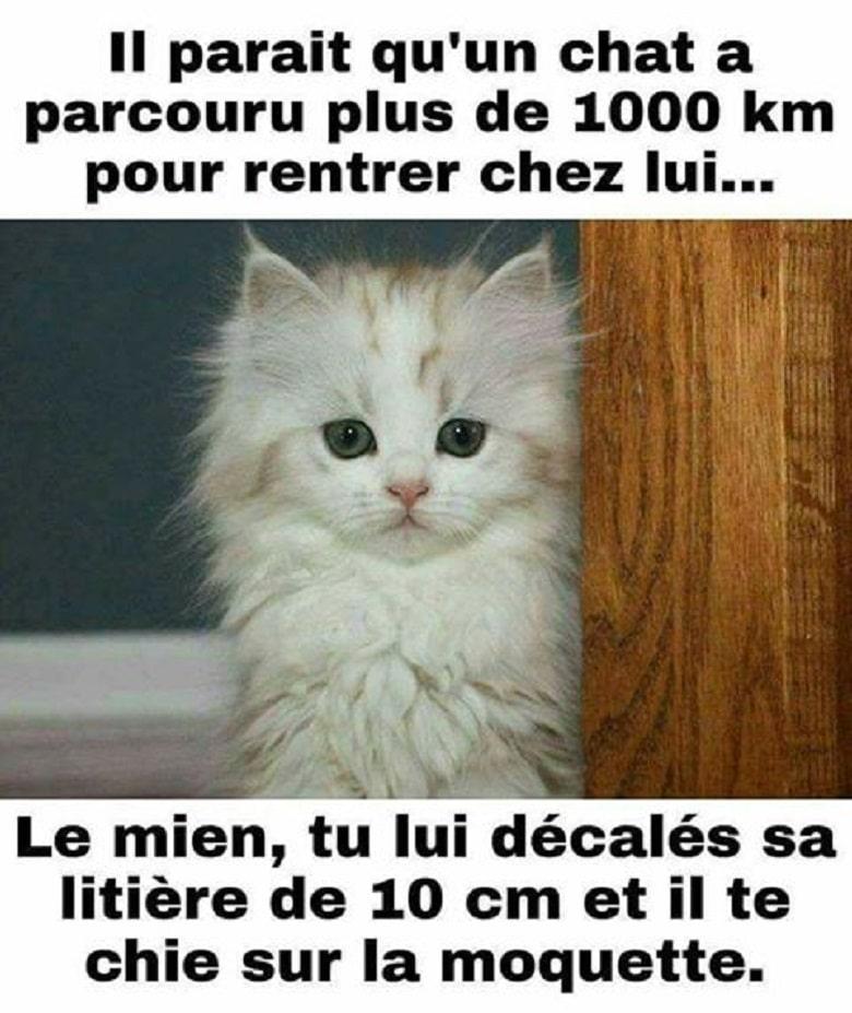 Il parait qu'un chat a parcouru plus de 1000 km pour rentrer chez lui...