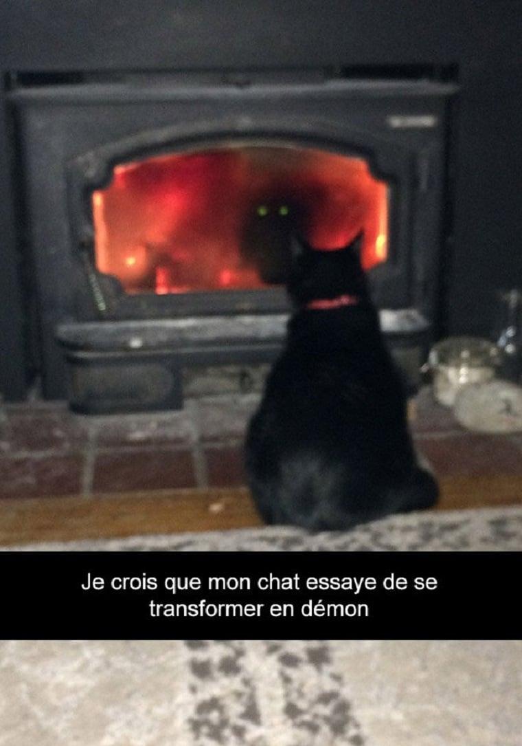 Je crois que mon chat essaye de se transformer en démon