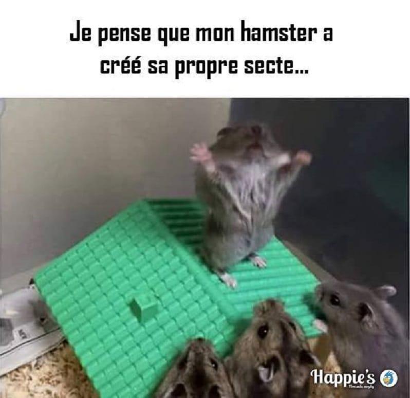 Je pense que mon hamster a créé sa propre secte...