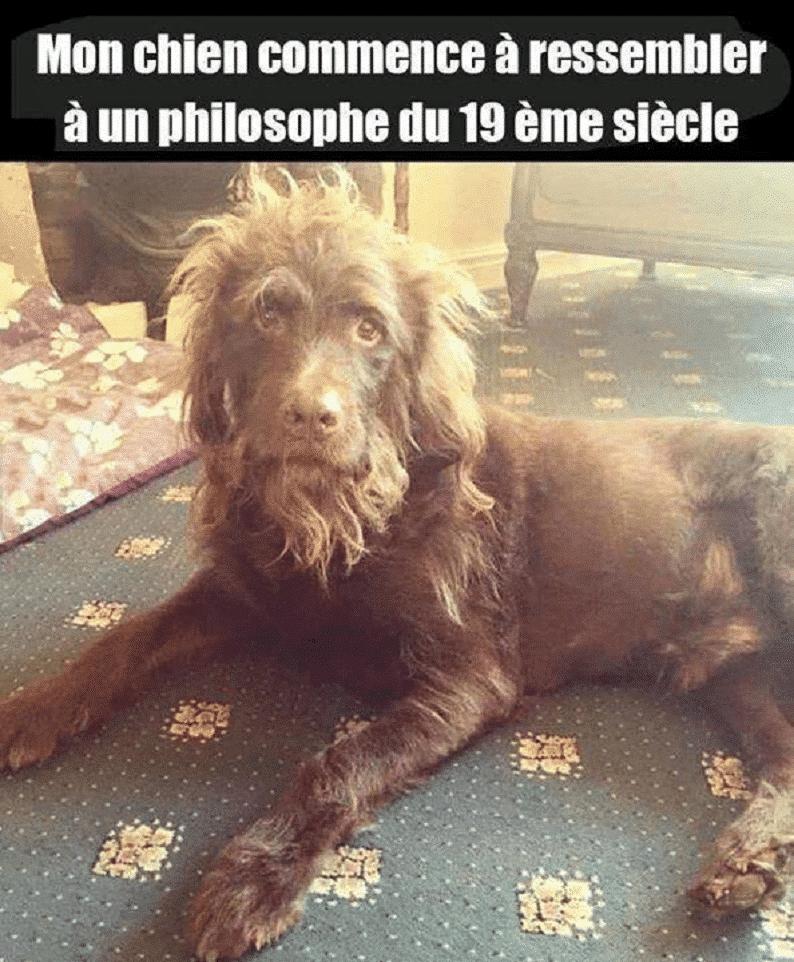 Mon chien commence à ressembler à un philosophe du 19 ème siècle.