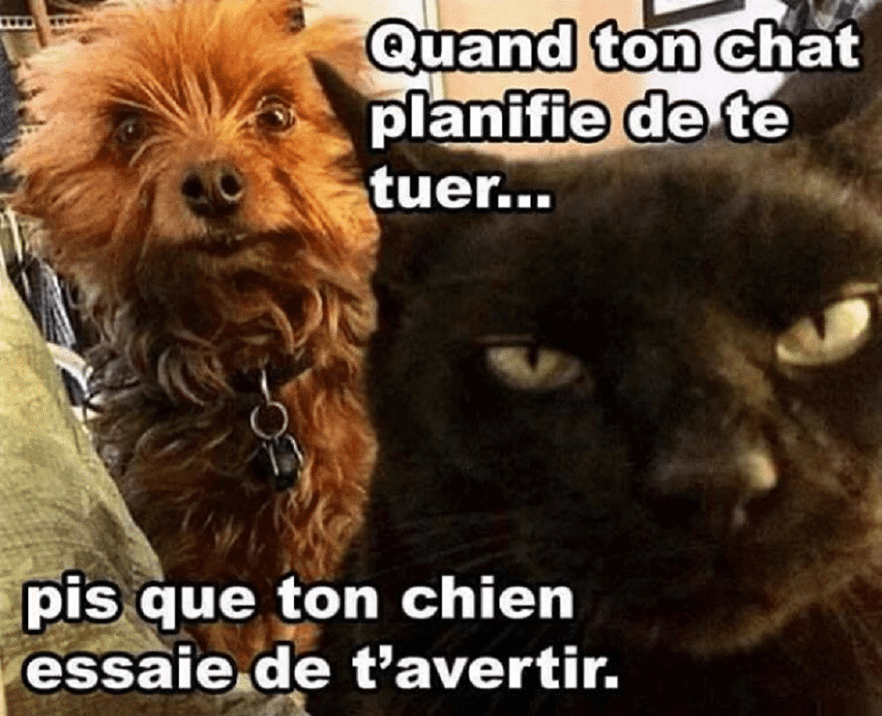 Quand ton chat planifie de te tuer...