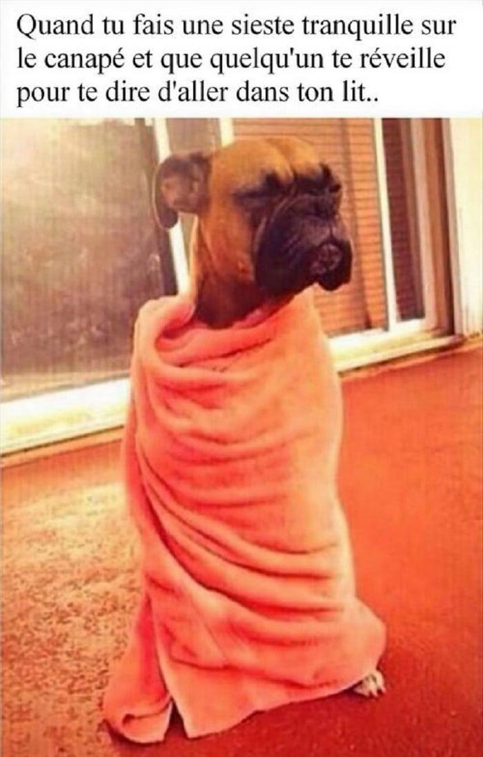 Quand tu fais une sieste tranquille sur le canapé et que quelqu'un te réveille