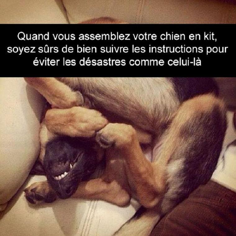 Quand vous assemblez votre chien en kit...