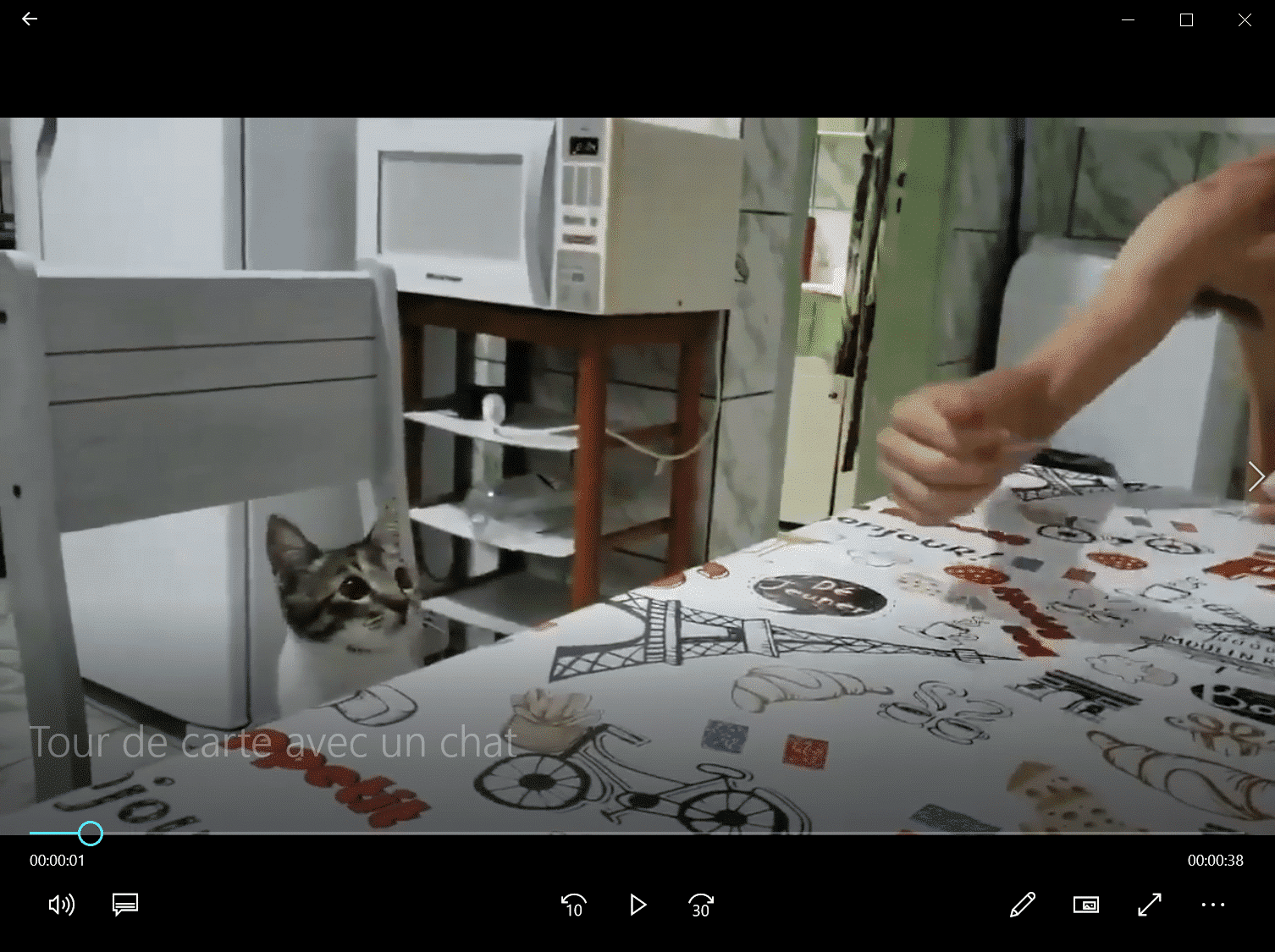Tour de carte avec un chat