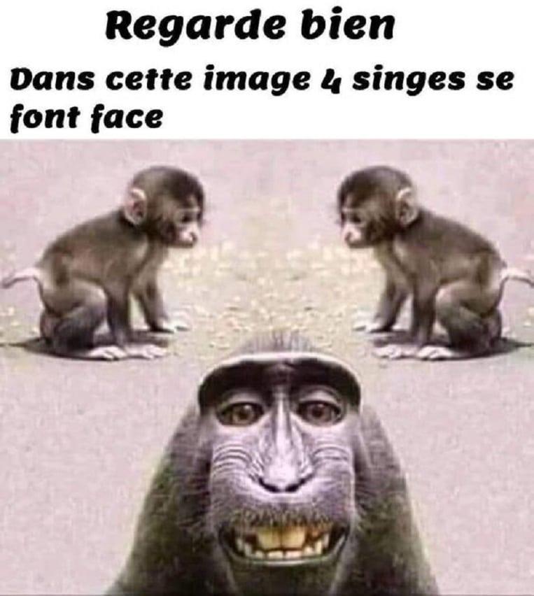 Dans cette image 4 singe se font face