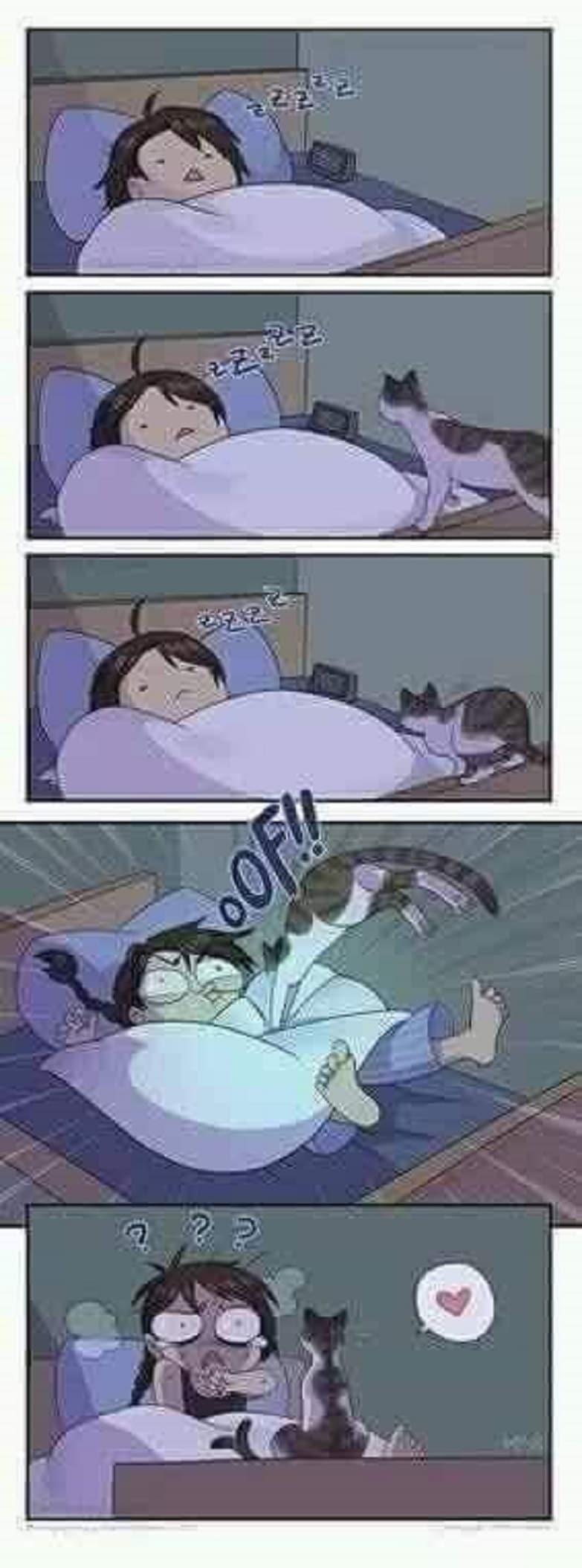 Les chats en pleine nuit