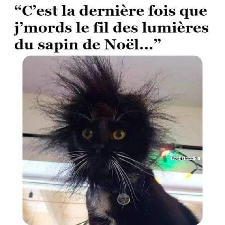 C Est La Derniere Fois Que J Mords Le Fil Des Lumieres Du Sapin De Noel