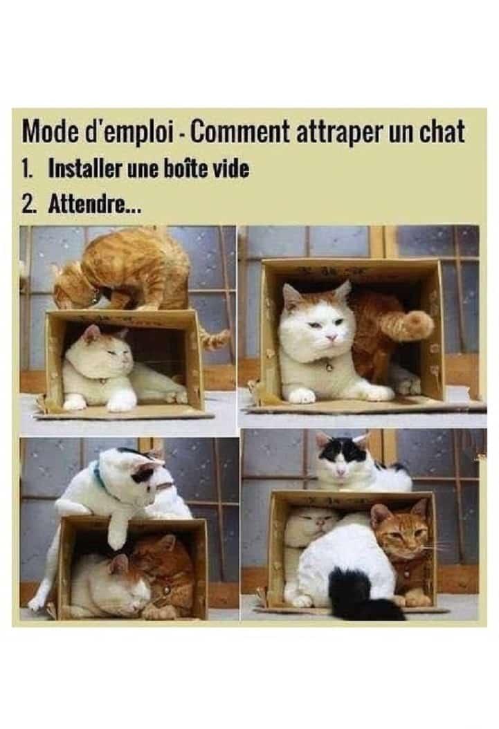 Comment attraper un chat