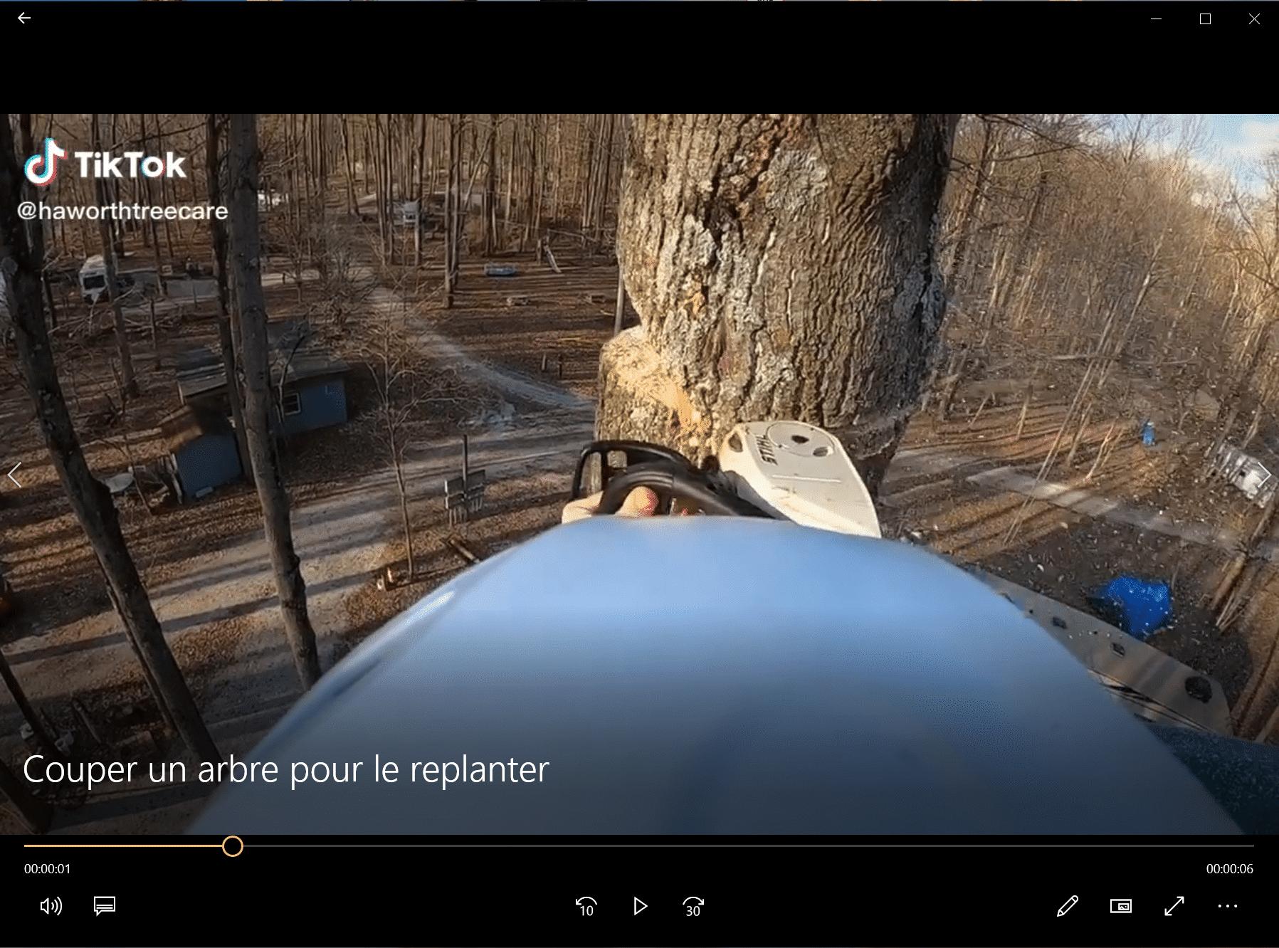 Couper un arbre pour le replanter