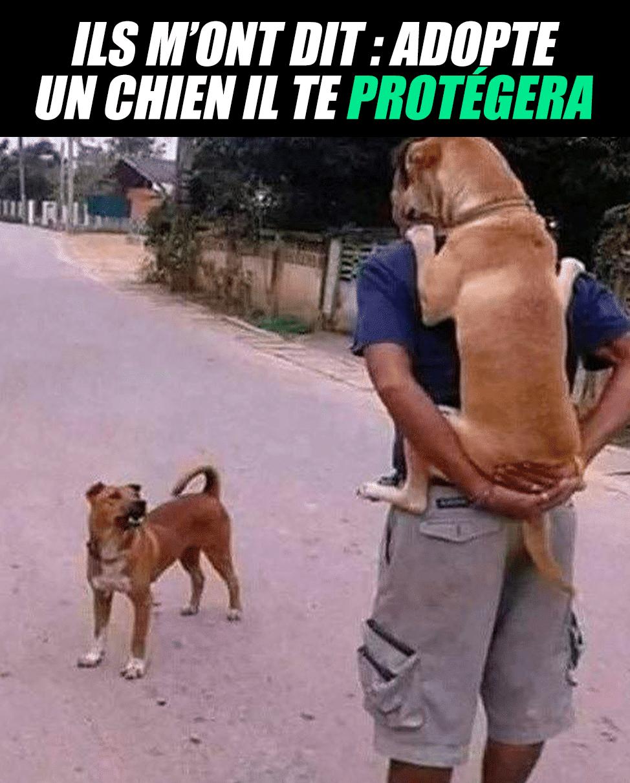 Adopte un chien il te protégera