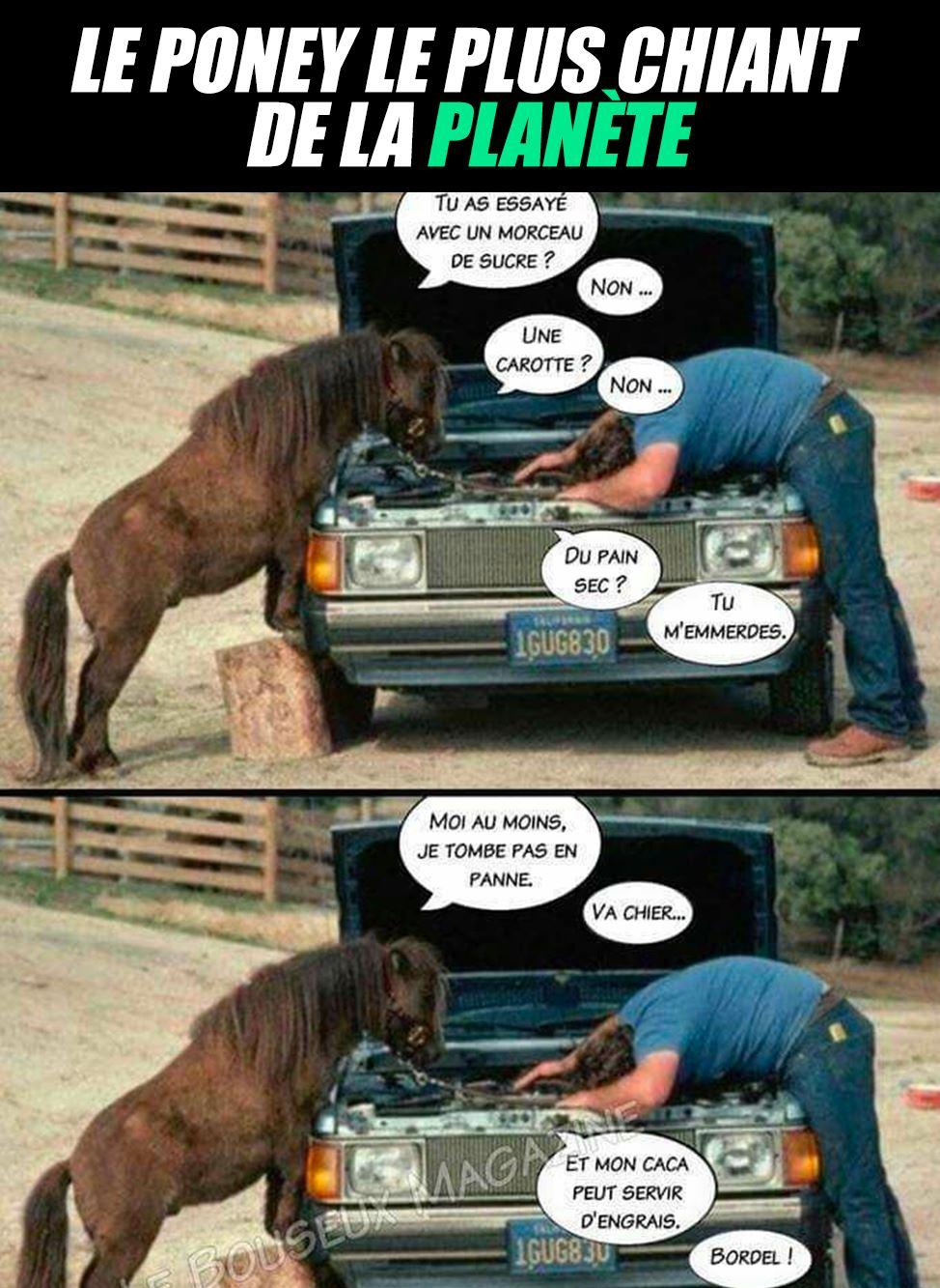 Le poney le plus chiant de la planète