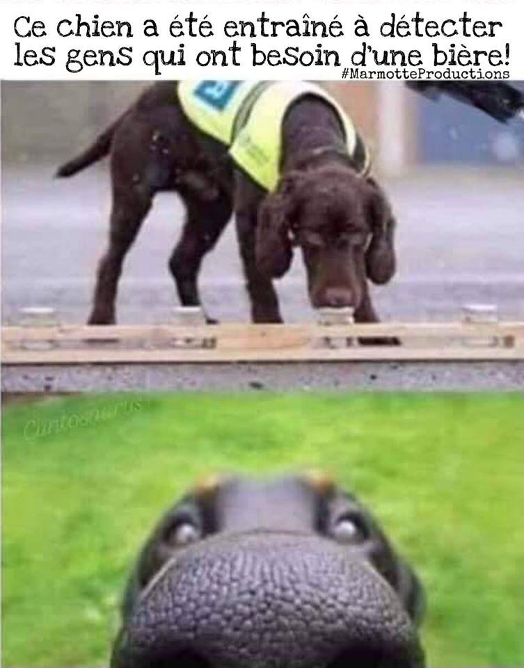Ce chien a été entraîné à détecter