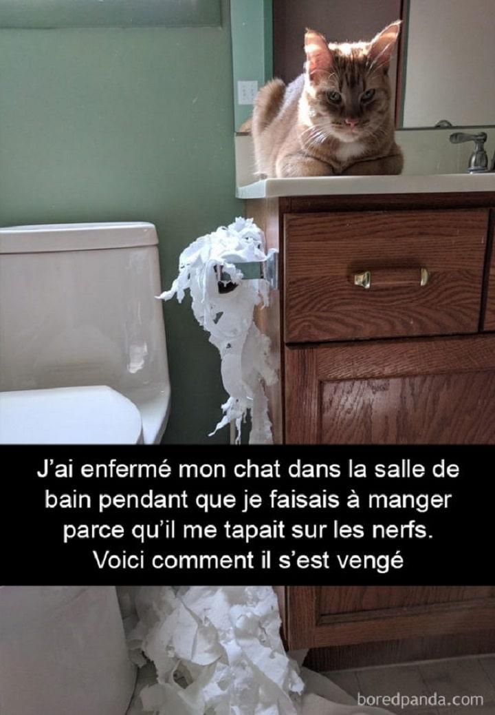 J'ai enfermé mon chat dans le salle de bain