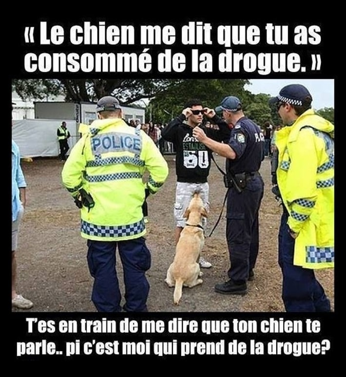 Le chien me dit que tu as consommé de la drogue
