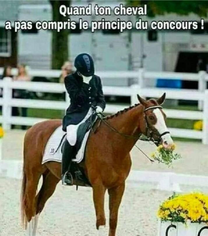Quand ton cheval a pas compris le principe du concours !