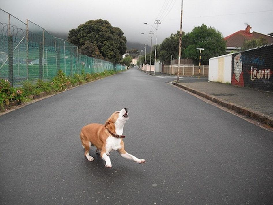 maîtriser chien qui aboie trop