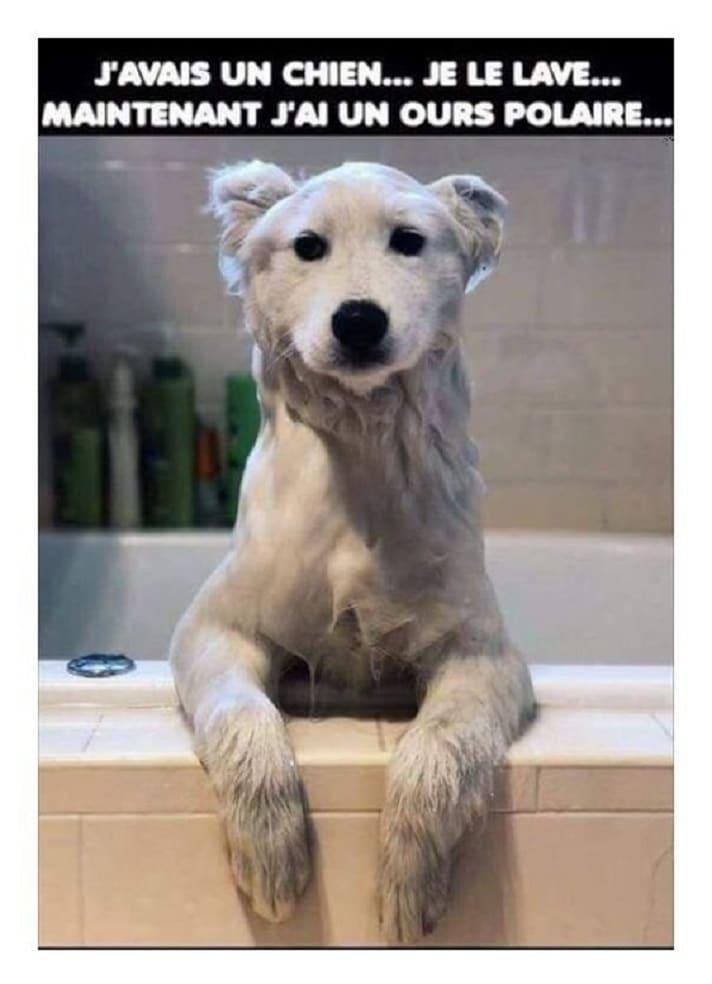 J'avais un chien... je le lave...