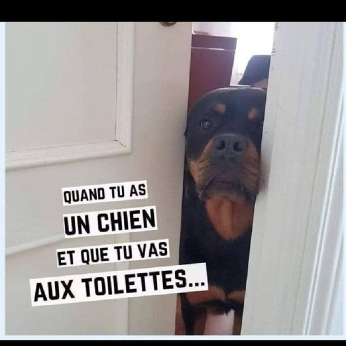 Quand tu as un chien et que tu vas aux toilettes...