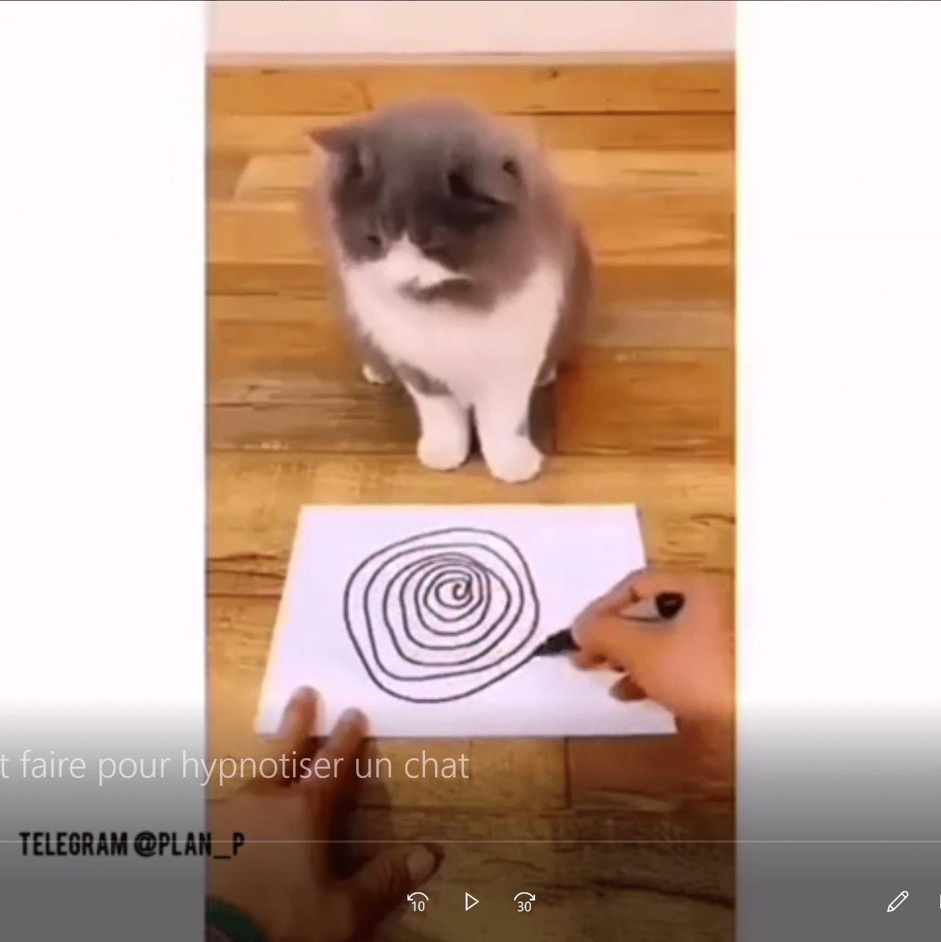 Comment faire pour hypnotiser un chat