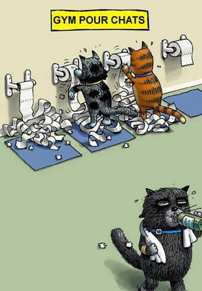 Gym pour chats