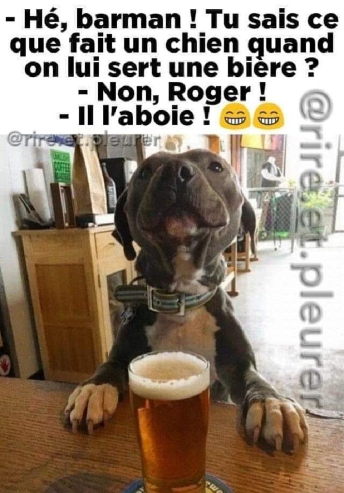 Tu sais ce que fait un chien quand on lui sert une bière