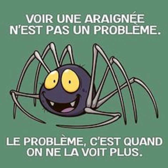 Voir une araignée n'est pas un problème.
