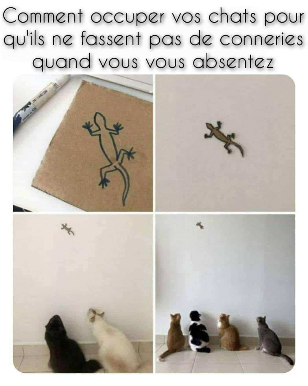 Comment occuper vos chats
