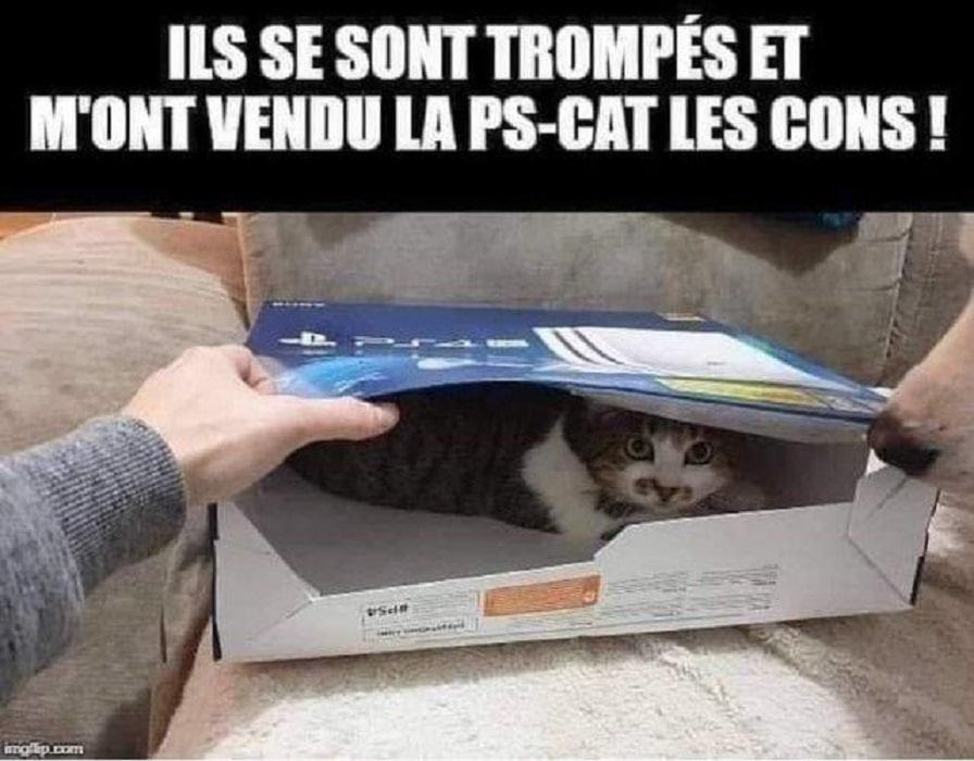 Ils se sont trompés et m'ont vendu la PS-CAT les cons !