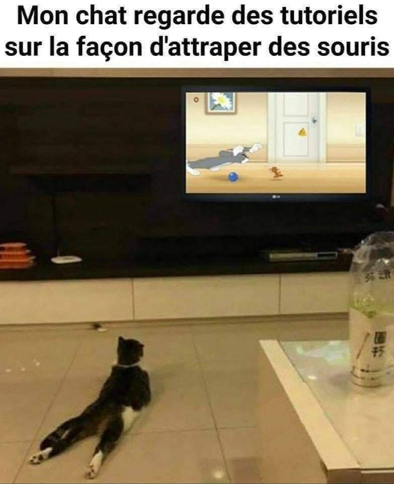 Mon chat regarde des tutoriels sur la façon d'attraper des souris