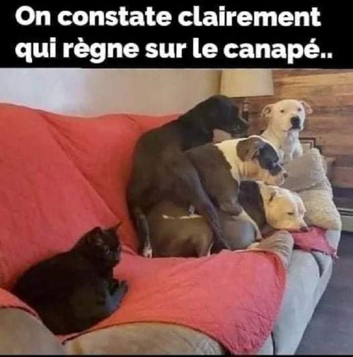 On constate clairement qui règne sur le canapé