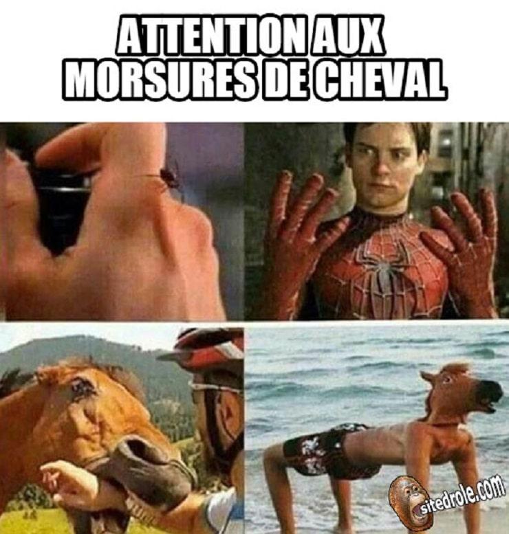 Attention aux morsures de cheval