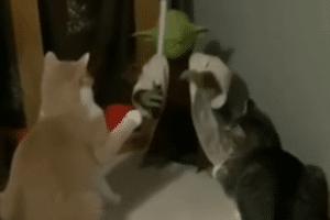 Yoda vs chats