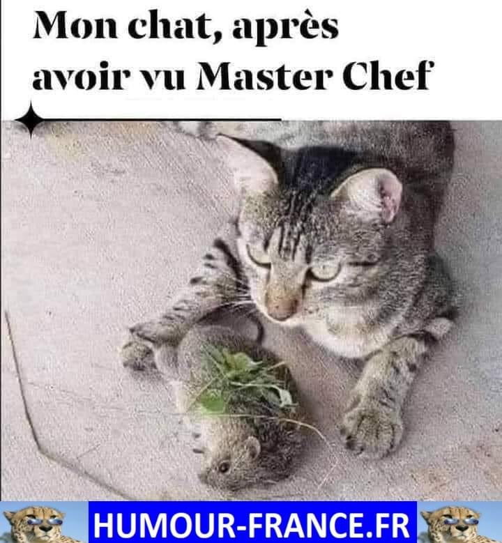 Mon chat, après avoir vu Master Chef.