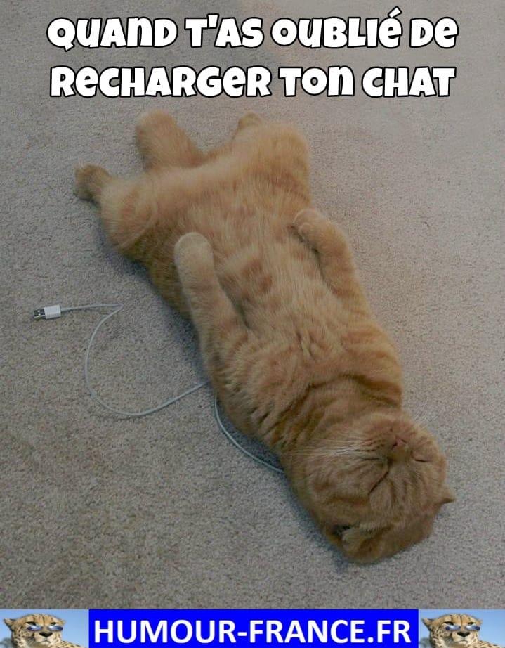Quand t'as oublié de recharger ton chat.