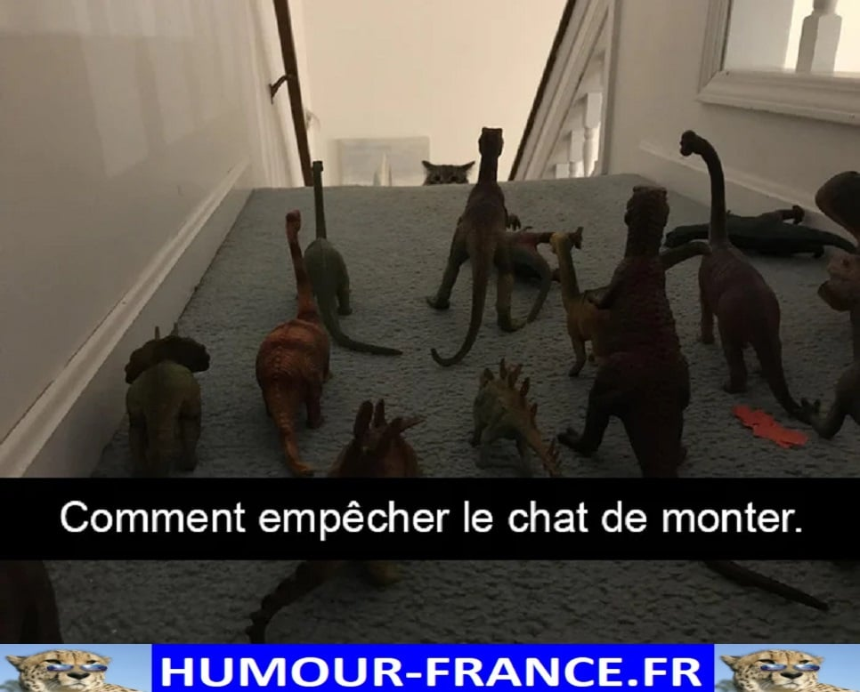 Comment empêcher le chat de monter.