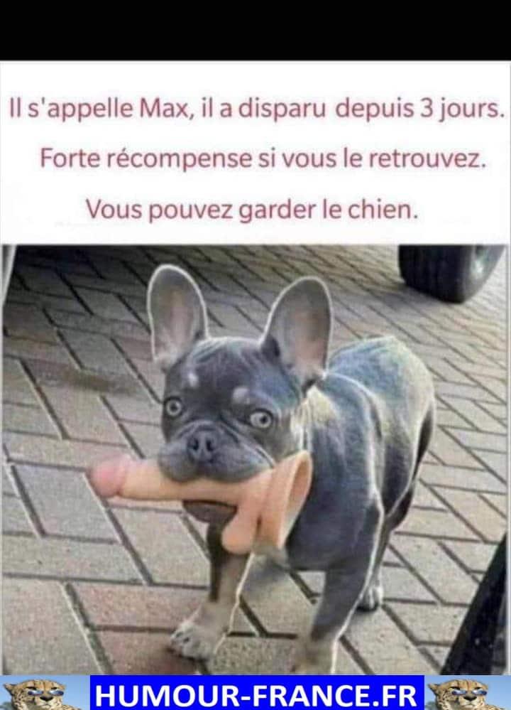 Il s'appelle Max, il a disparu depuis 3 jours.