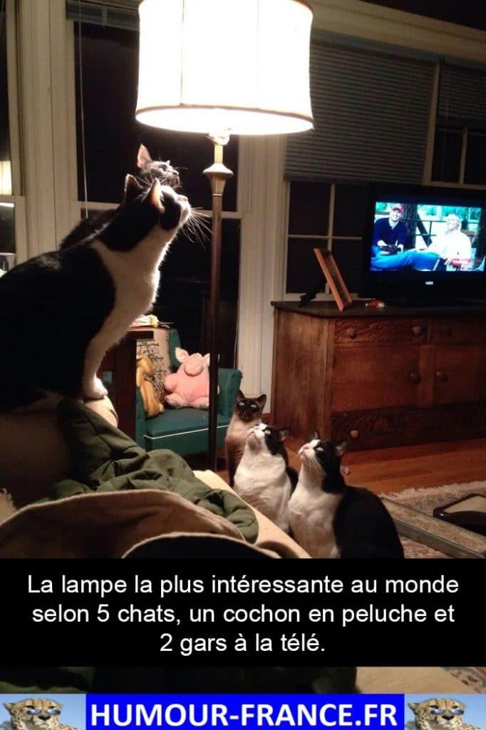 La lampe la plus intéressante au monde selon 5 chats, un cochon en peluche et 2 gars à la télé.