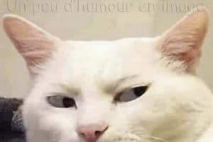 Moi quand je vois quelqu'un s'approcher du placard ou j'ai caché mes gâteau