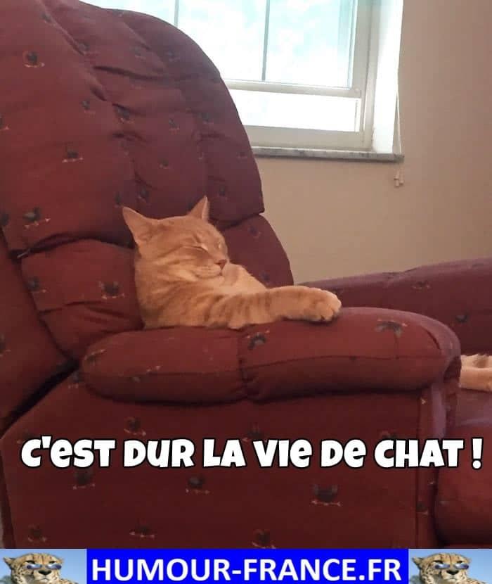 C'est dur la vie de chat !